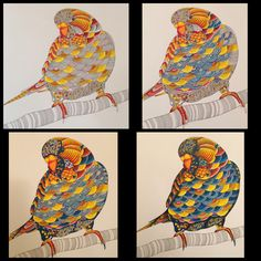 4 Stages of creating this amazing budgie - Millie Marotta Animal Kingdom colouring book!