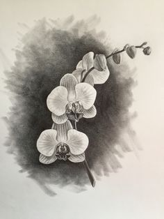 Orchid, Graphite on paper, Copyright 2016 Bill Finewood