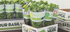 microgreens packaging ideas - Google Search