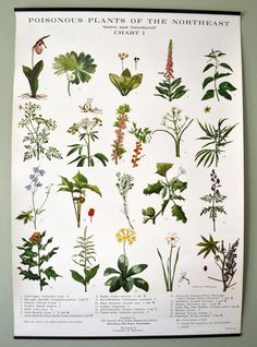 Poisonous plants wall poster