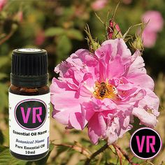 10ml Rose Otto Rosa Damascena 100 Pure Essential by VandaRoseAroma