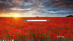 Get Bing wallpapers and search on your desktop with Bing Desktop Field Wallpaper, Wallpaper Backgrounds, Wallpapers, Google Desktop, Just Amazing, Bing Images, Country Roads, Mountains, Search