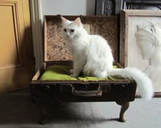 Vintage Suitcase Pet Bed by Gorgeoustuff on Etsy