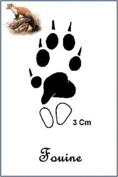 Fouine (Martes foina) Happy Trails, Kindergarten, Survival, Foot Prints, Wild Animals, Survival Tips, Zoology, Doggies, Hunting