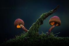 . : otherworld : . - http://www.martin-pfister-photography.de/ I love this ball head of the small mushroom!  Thought it looks like from another world...  ...hope you like it! :)  Many thanks to all! :)