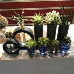 yuyuさんの、Kitchenカウンター,水栽培,観葉植物のある生活,多肉植物,器と植物,グリーンインテリア,観葉植物,Lounge,のお部屋写真