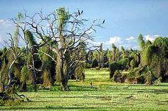 Formosa Argentina - Argentina - Wikipedia, the free encyclopedia