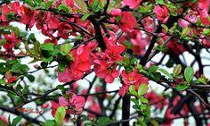 Floral Friday Fotos 06-2016