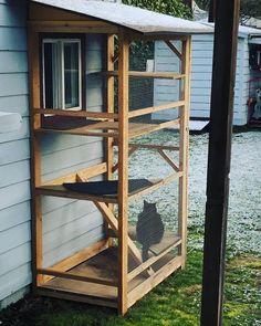 Arts And Crafts Office Furniture Outdoor Cat Enclosure, Reptile Enclosure, Cat Cages, Cat Run, Cat Playground, Animal Room, Pet Furniture, Office Furniture, Outdoor Cats