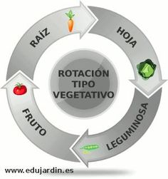 Rotación de cultivos por tipo vegetativo de la parte comestible de la hortaliza