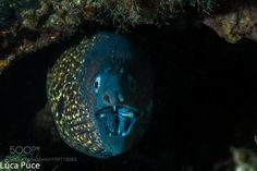 Moray-Murena by puceluca #nature #photooftheday #amazing #picoftheday #sea #underwater