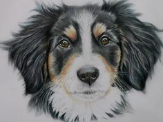 Collie puppy drawn in cps on drafting film