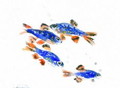 Danio Margaritatus 10 X 8 in original watercolor by ORIGINALONLY