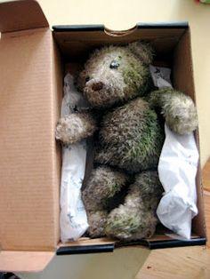 dirty teddy inabox