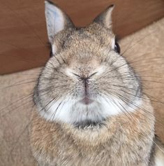 Sometimes they're all up in your face. | Literally Just 21 Pictures Of Dwarf Rabbits Being The Most Adorable Creatures On Earth