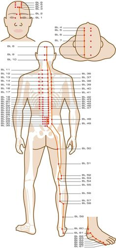 Note: Academic sources are conflicted on the numbering of the points in this meridian. Some sources number the points along the secondary spinal branch differently.BL 1: jing ming / Bright EyesFunction: Expels wind, clears heat, brightens the eyes, stops pain, stops itching, stops lacrimation.Indications: Redness, swelling and pain of the eye, itching of the canthus, …