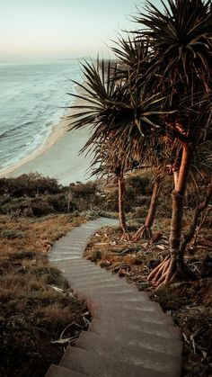 green palm tree near sea during daytime photo – Free Plant Image on Unsplash Beach Wallpaper, Summer Wallpaper, Wallpaper Wallpapers, Beach Aesthetic, Travel Aesthetic, Ocean Photography, Landscape Photography, Beach Photos, Cool Photos