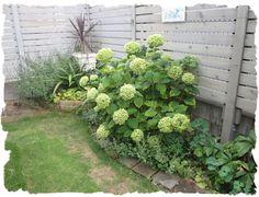 やっと庭のアナベルをドライにするべくカットしました淡い黄緑色が好き♪カットする時...