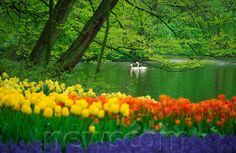 springtime around the world | ... springtime setting at keukenhof gardens the world s largest steve