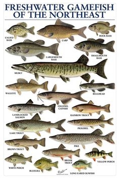 Freshwater Game fish of Northeast