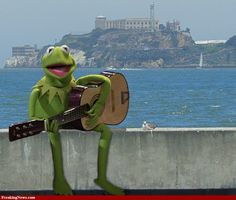 Happy Frog kermit with Alcatraz in the background Funny Profile Pictures, Reaction Pictures, Sapo Kermit, Funny Kermit Memes, Fraggle Rock, Kermit The Frog, Mood Pics, Miss Piggy, Amphibians