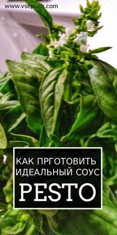Как приготовить дома идеальный соус Песто #соус #песто #рецепт #приготовить #pesto
