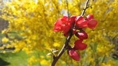 getting ready for spring break! Sunday Funday, Spring Break, Switzerland, Hiking, Yellow, Flowers, Plants, Red, Photography