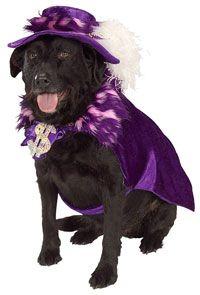 Big Daddy Pimp Dog Costume - Dog Costumes