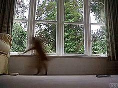 Window Patrol at DEFCON 2