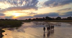 Robin Pope #Safaris' Walking Mobile Safaris are synonymous with #African #wilderness adventure in #Zambia's South #Luangwa National Park. Your journey starts with two relaxing evenings at #Nkwali before you head north to a remote area to begin your trek.