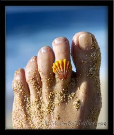 Adorable Seashell Toe Ring from Hawaii!