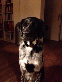 #cute dog #gentleman #funny #christmas dog