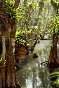 Florida swamp .. photographer David Moynahan