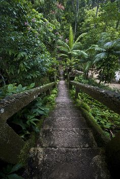 Grand Staircase - Paronella Park Innisfail, Queensland Australia.  Built in the 1930s by José Paronella, a Spanish immigrant.    by chris.baxter on Flickr