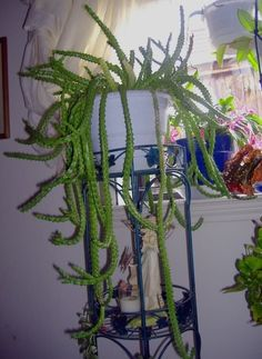 """succulents and cacti photos 