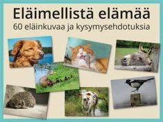 Eläimellistä elämää -kuvasarja ja kysymykset ryhmätoimintaan