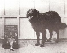 Swansea Jack, the Lifeguard   A Brief History Of AwesomeDogs