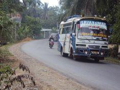 bus pada sebuah tikungan, padang bolak, tapanuli selatan, sumatera utara
