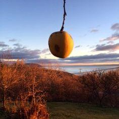 Une pomme dans le ciel de Charlevoix! #moncharlevoix #charlevoisatr #automneencouleur #ciel #douceurdutemps #etrange by lysebrunet