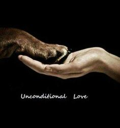 Unconditional love. With you and your dog. Love the one who brings joy and happiness to your life and is happy to see you at any moment.