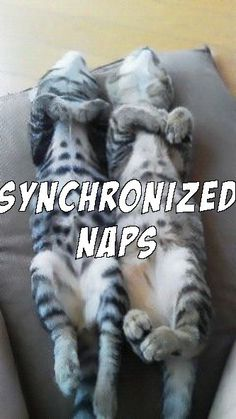 sleeping cats is funny