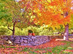 Fallen Leaves II (Fall+colors trees ). Photo by Biskitten