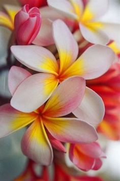 Flowers Kauai offers a variety of tropical flowers from its small Hawaii flower farm. Tropical flower arrangements are carefully packaged and delivered fresh. Flores Plumeria, Plumeria Flowers, Lilies Flowers, Exotic Flowers, Tropical Flowers, Beautiful Flowers, Hawaii Flowers, Bright Flowers, Hawaii Vacation