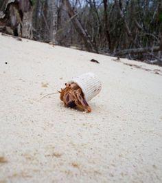 Ces images effrayantes qui témoignent de l'impact de la pollution des océans sur les animaux