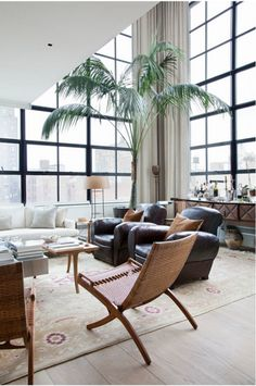 Indoor palm in a double height space