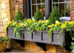 In early spring, cool weather flowers like pansies spruce up a window box. Here with evergreens and ivy.