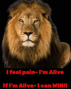 Lion Quotes, Feelings, Cats, Animals, Gatos, Animales, Leo Quotes, Animaux, Animal