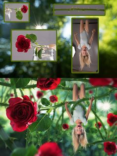 Photoshop Before and After Rose Garden
