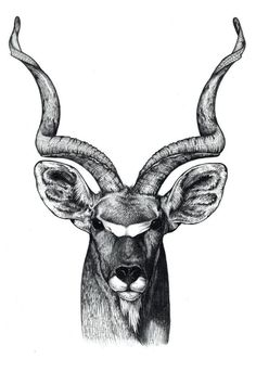 A gemsbok of the Kalahari Bushmen. It is benign and peaceful and helps the tribe to keep wild dogs away by stabbing its antlers towards them. Hirsch Illustration, Deer Illustration, Animal Sketches, Animal Drawings, African Animals, African Art, Bull Tattoos, Deer Art, Bull Skulls