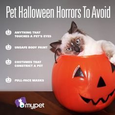 Halloween is just around the corner and there are pet costumes a plenty! Although cleverness and cuteness are key for Halloween pet costumes, we all know safety should be paramount.